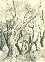 22_mom-1948-sketchbook-trees-001.jpg